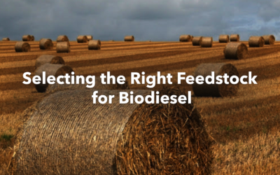 Selecting the Right Feedstock for Biodiesel